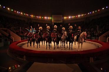 Тверской цирк приглашает на программу «Морские львы»