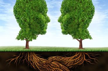 Год экологии скоро вступит в свои права